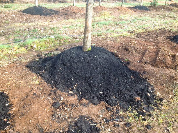 The root balls are covered with a porous bark chip/leaf mulch combination